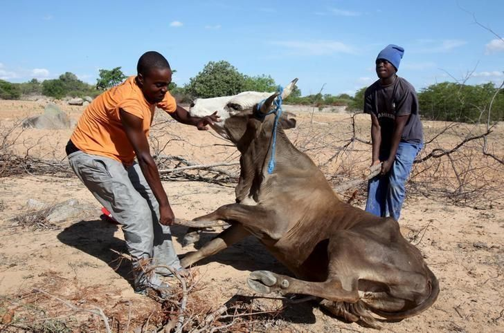 Drought-hit Zimbabwe sells off wild animals | Reuters