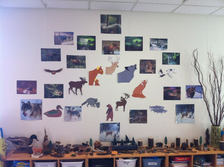 Science Forest Focus Wall: Boreal Forest focus wall we used to discuss things we might see in the forest.