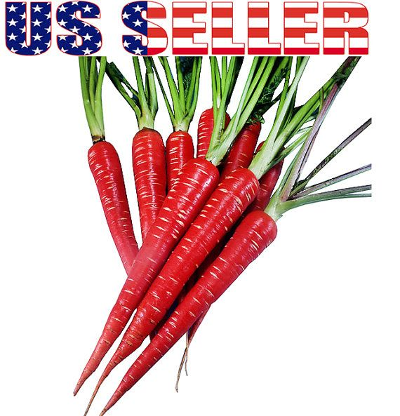 200 Atomic Red Carrot Seeds Heirloom NON-GMO RARE by HarleyStore