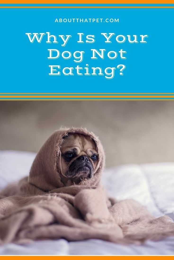 Why Is My Dog Not Eating Dog Wellness Dogs Dog Care Tips