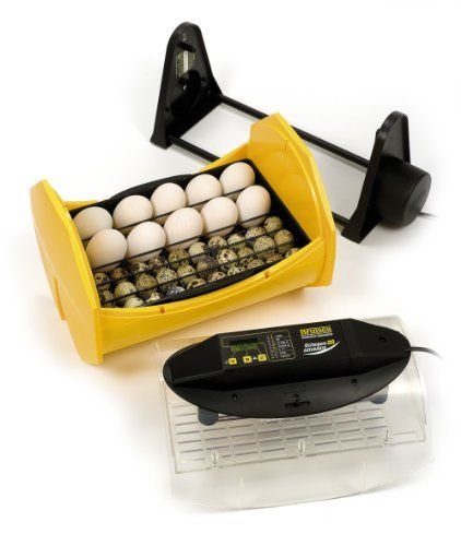 Brinsea Products Fully Automatic Egg Incubator for Hatching 24 Chicken Eggs or Equivalent http://buyeggincubators.com/product/brinsea-products-fully-automatic-egg-incubator-for-hatching-48-chicken-eggs-or-equivalent/