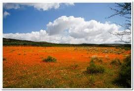 west coast flowers - Google Search