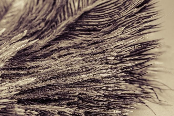 Bird feather macro by sanches812 on @creativemarket