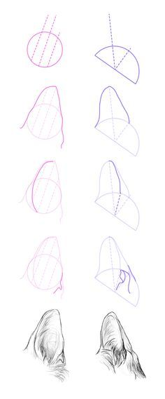 How to Draw Dog Ears Step 1 The ancestor of dogs, a wolf, has pointed ears, and they still can be found in many breeds. They're quite easy to draw. The more hairy the dog, the more fluffy the ears (compare a German Shepherd and Alaskan Malamute).
