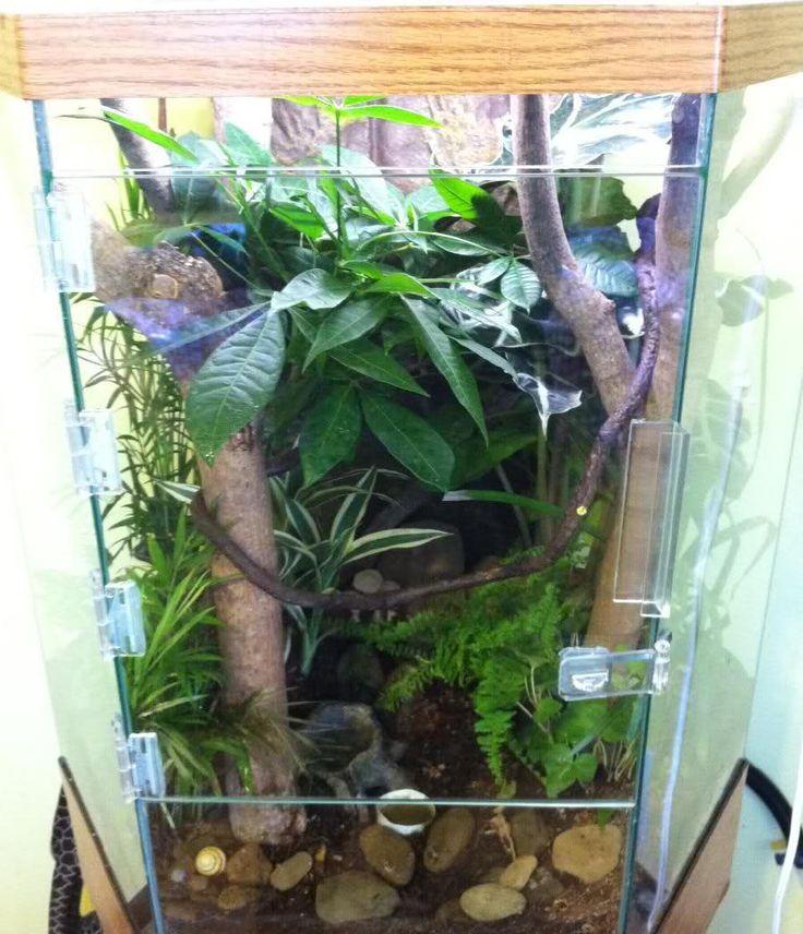 25 best ideas about gecko vivarium on pinterest vivarium snake terrarium and frog terrarium. Black Bedroom Furniture Sets. Home Design Ideas