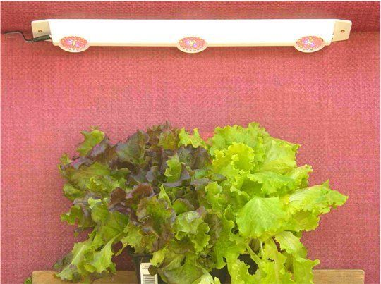 Under-Counter LED Grow Lights. Grow your greens year-round with this neat little light. Costs only about 2 cents per day to operate and takes up very little space.