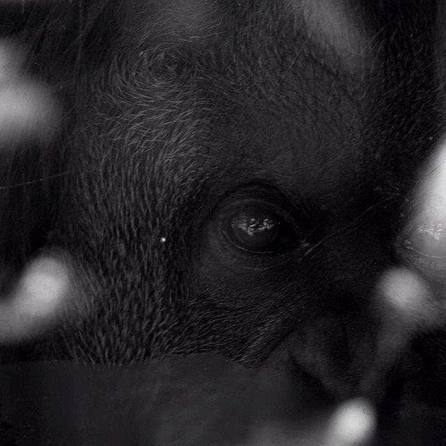 Zoológico de Buenos Aires. Argentina #instagram #ig_venezuela #gf_ve #igworldclub #igermiranda #ig_caracas #ig_watchers #instabyn_ve #instavenezuela #photooftheday #streetphotovenezuela #elnacionalweb #igerscaracas #likesMagazine #Fotovzla #photowall #uno