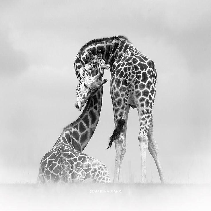 Marina Cano - Wild