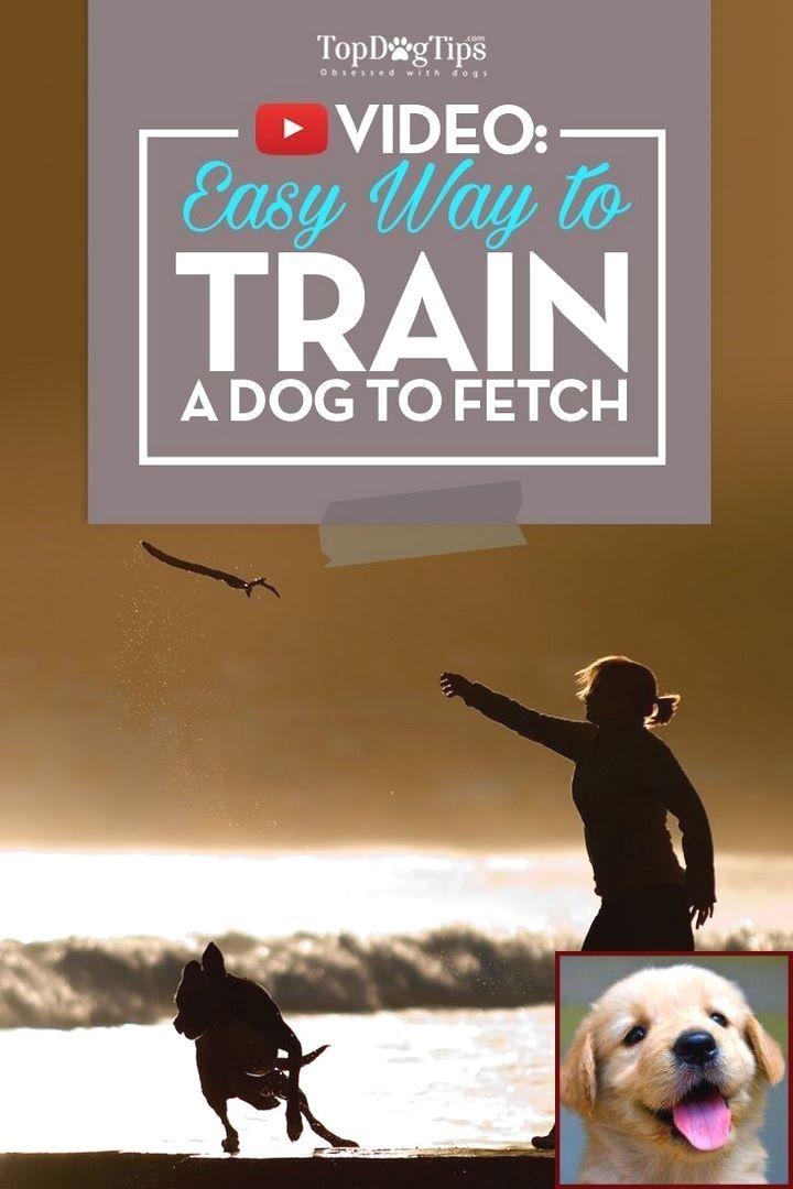 Potty Training Puppy Zak George And Dog Behavior Books Dog