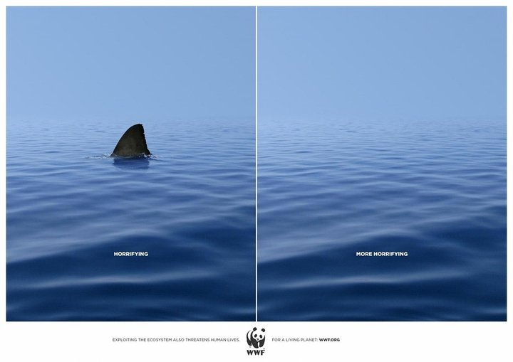 Ban shark finning. Say no to shark fin soup.   ...........click here to find out more  http://googydog.com