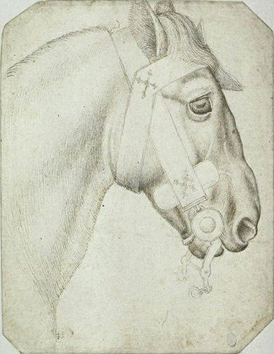 Pisanello, head and neck of a bridled horse, mid 15C. Codex Vallardi 2357, Louvre, Paris.