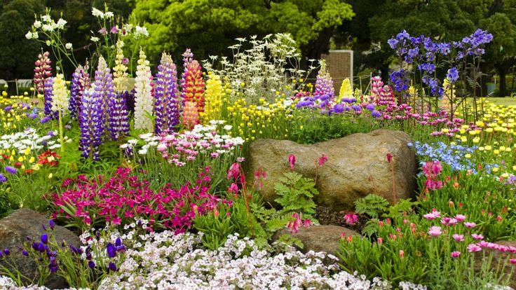 Blumenbeet anlegen: Die besten Tipps für volle Farbpracht