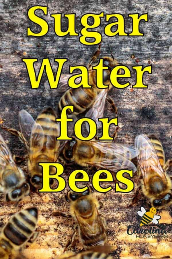 Feeding Bees Sugar Water How Why Feeding Bees Sugar Water For Bees Water For Bees