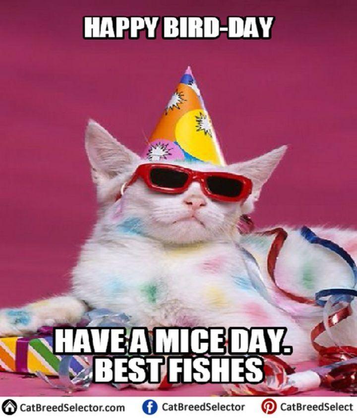 101 Funny Cat Birthday Memes Happy Bird Day Have A Mice Day Best Fishes Funny Cat Memes Happy Birthday Cat Cat Birthday Memes
