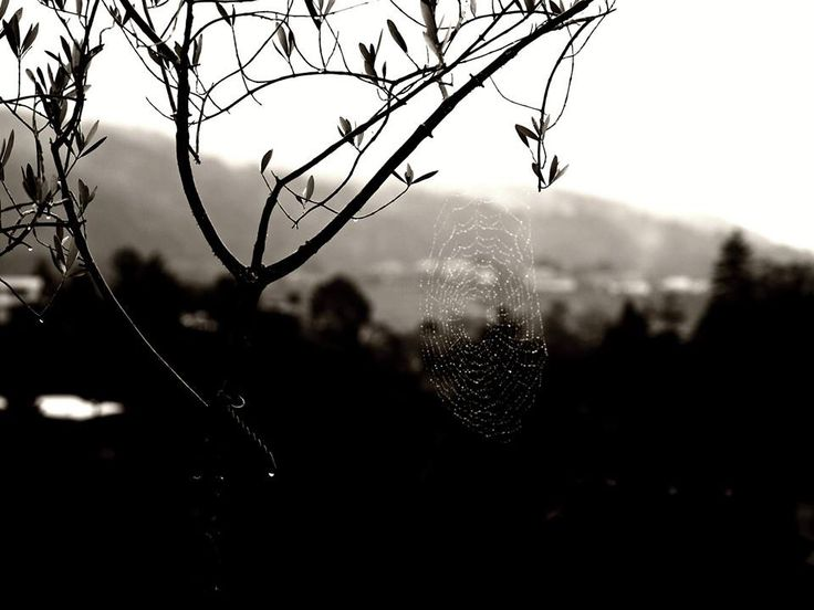 Photography - my charlottes web (great view of the city)