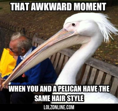 That Awkward Moment When You And A Pelican..
