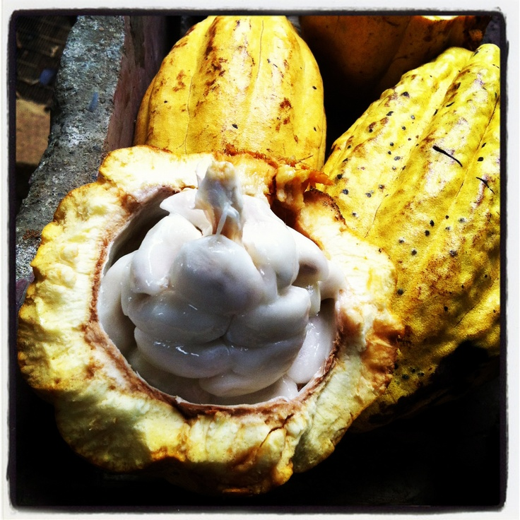 #Cacao. The seeds are dried and ground to become #chocolate. These are found in certain areas of #costarica