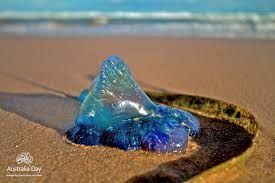 Blue bottle jellyfish - even the joy of Summer can bring risk. #seasonsforgrowth