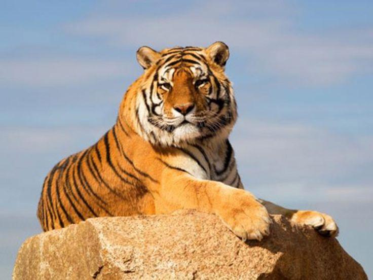 Sonanadi Wildlife Sanctuary - in Uttarakhand, India