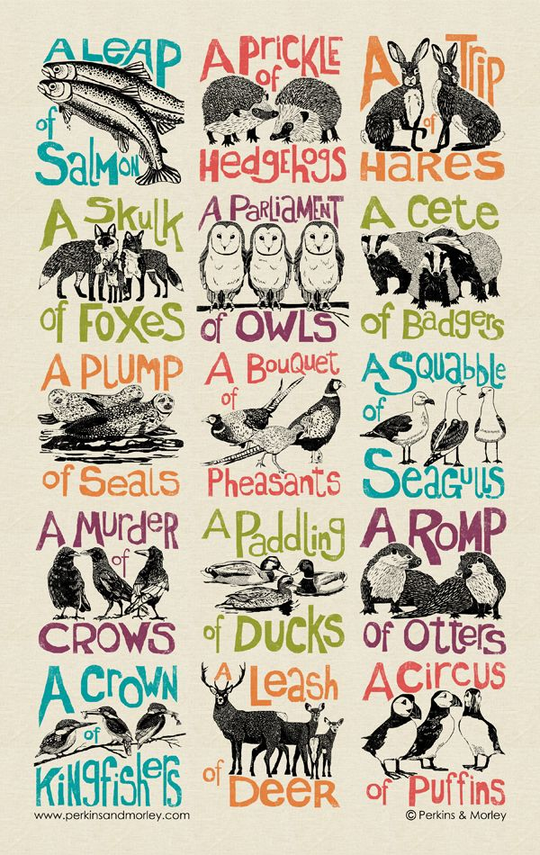 Pack of 6 Quirky & educational - each collective noun features an illustration of the animal. Designed by Jan Morley