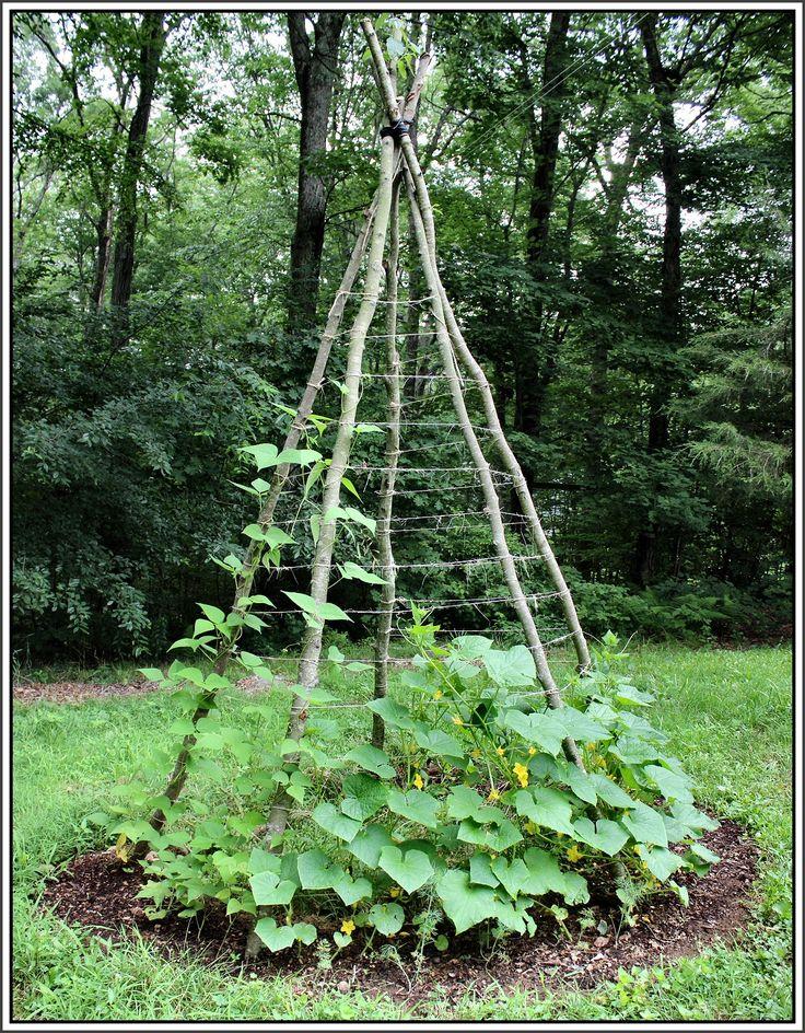 Homemade Garden Trellis Ideas | Vertical Gardening: Teepee Trellis