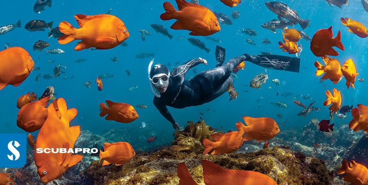 Join the freedom and start Freediving!  May 2016 Newsletter http://eepurl.com/b3qVlX