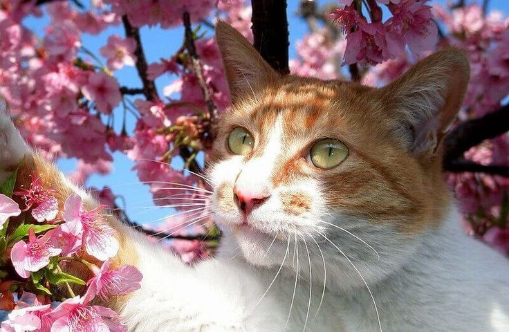 Best 500 Japanese Cat Names Male & Female Names with
