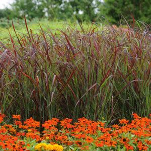 10 best backyard pond designs images on pinterest pond for Ornamental grasses for ponds