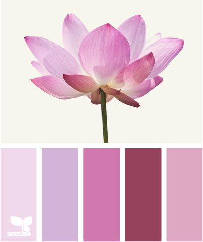 303 best lotus images on pinterest lotus flowers lotus blossoms lotus pink adore the colors and hues perfect for paint colors to use in room mightylinksfo