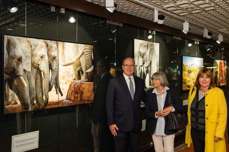 Exposition 'Sauvez les éléphants d'Afrique' Crédit photo  © Axel Bastello -  Palais Princier - © Axel Bastello - Palais Princier