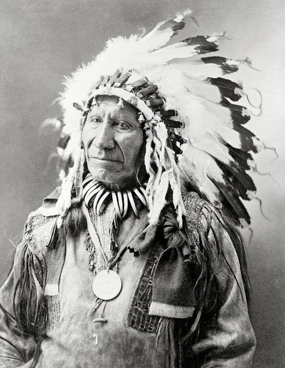 chief american horselakota sioux indian in feather