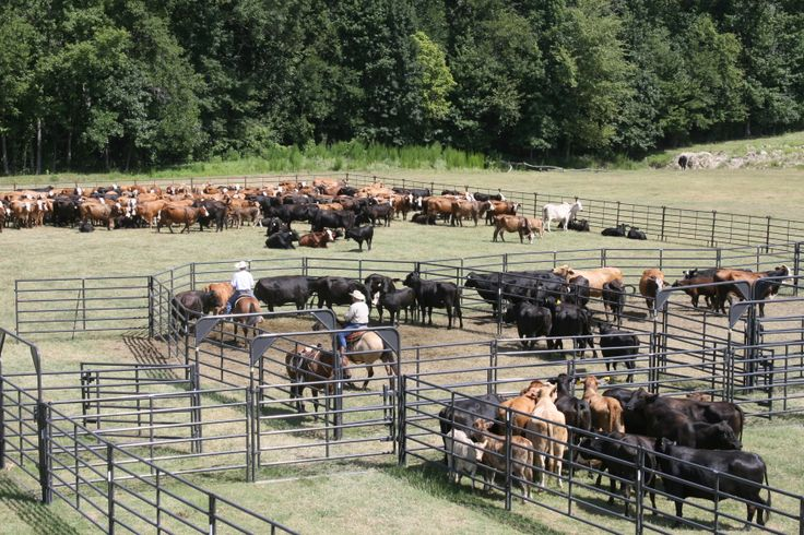 Rough Stock Corral, visit Priefert.com.
