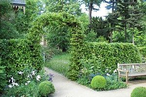 Heckentor aus der Rotbuche, Fagus sylvatica Heckenpflanzen