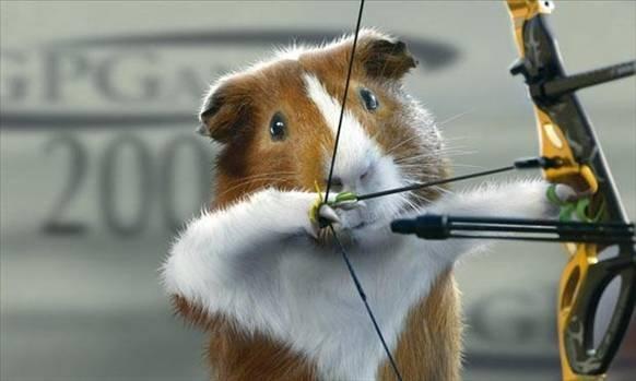 guinea pig archer! haha