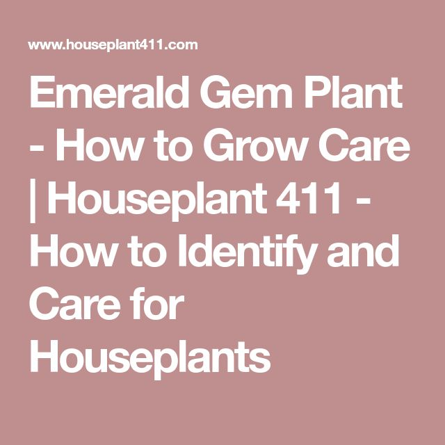 Emerald Gem Plant - How to Grow Care | Houseplant 411 - How to Identify and Care for Houseplants