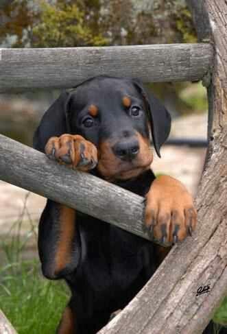 dog #puppy