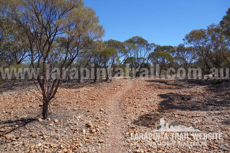 Pleasant walking near Redbank Views at the foothills of Mount Sonder. Image looking west. © Explorers Australia Pty Ltd 2014