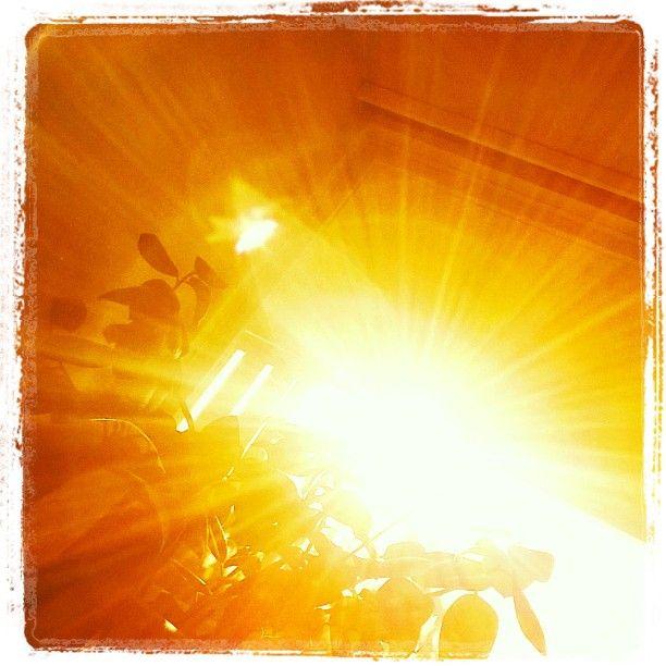 #aurinko #tänään #sunshine #auringonpaisteessa