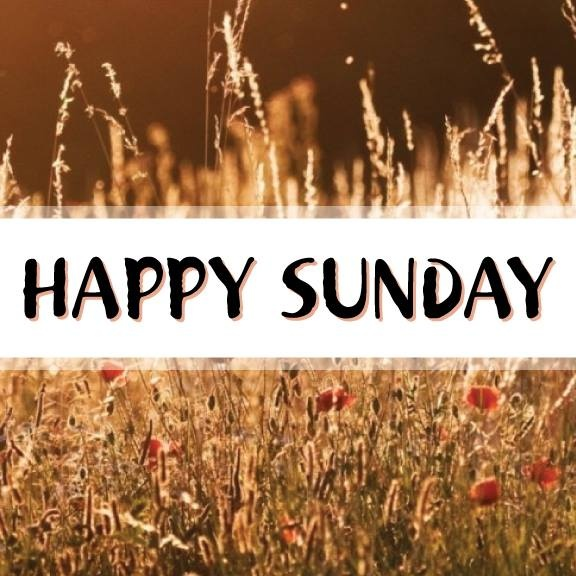 Sunday Funday Quotes: 299 Best Blessed Sunday Images On Pinterest
