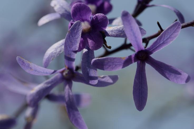 Purple Rain by Pieter Oosthuysen, via 500px