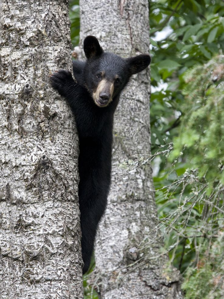 180 Best Images About Animals In The Great Smoky Mountains