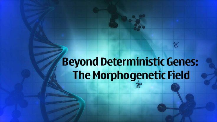 The Morphogenetic Field