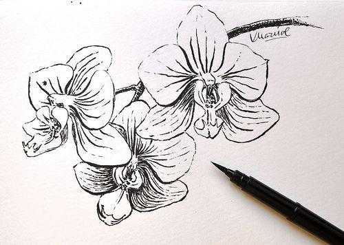 orquideas blanco y negro dibujo - Buscar con Google