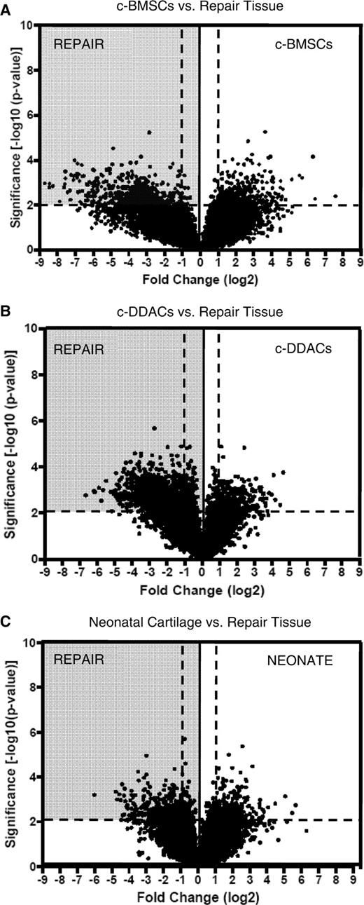 Volcano plots of probe set distributions for differential expression profiles. The volcano plots depict a divergent distribution of probe sets between repair tissue and bone marrow stem cells (c-BMSCs) (A), de-differentiated chondrocytes (c-DDACs) (B) and neonatal cartilage (C). Log2-fold change differences (cell type/repair tissue) of transcript abundance are represented across the horizontal axis; significance (−log10P-value) is represented across the y-axis. Significance of P = 0.01 is…