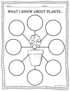 worksheet on types of plants for grade 2 google search school worsheets plants plant. Black Bedroom Furniture Sets. Home Design Ideas