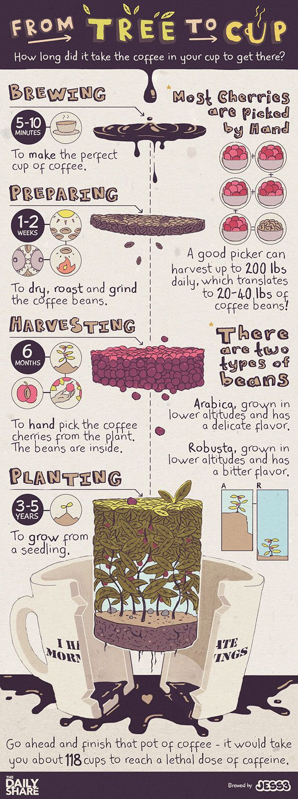 #Coffee : From Tree to Cup | #Infographic