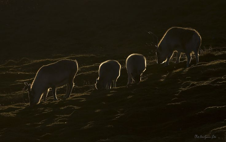 Grasing into the sunset by Ola Loe on 500px