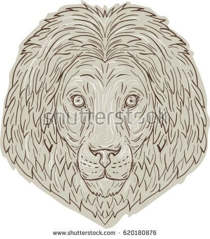 Drawing sketch style illustration of a lion big cat head with flowing mane viewed from front set on isolated white background.   #lion #drawing #illustration