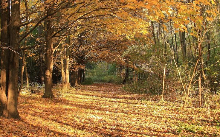 Обои аллея, тропинка, деревья, осень, листопад для рабочего стола, раздел природа