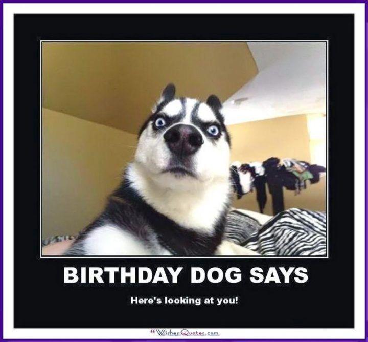 101 Funny Happy Birthday Dog Memes For Paw Lovers Everywhere Happy Birthday Cat Happy Birthday Dog Meme Birthday Meme Dog